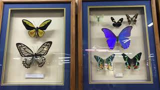 Парк бабочек и контактный зоопарк г.Екатеринбург #zoo