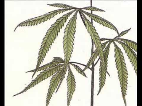 Terence Mckenna - Marijuana