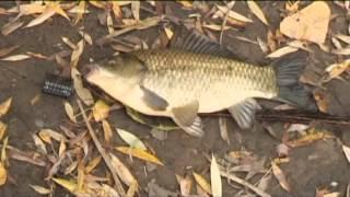 Моя рыбалка: Марлин(Моя рыбалка - передача о ловле рыбы на водоемах России и Зарубежья. Смотреть все выпуски онлайн: http://goo.gl/xZ3LK..., 2013-04-10T09:17:14.000Z)