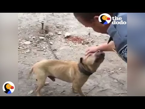 Dogs Chained Up to Fight Thank Policeman for Rescuing Them | The Dodo