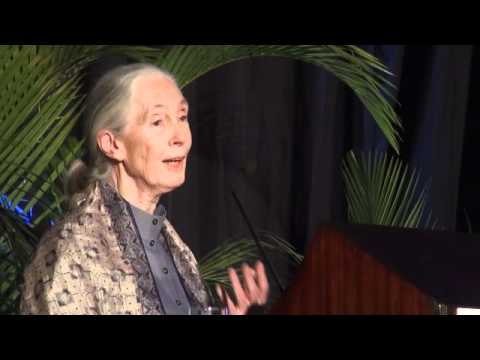 Jane Goodall on deforestation and possible solutions