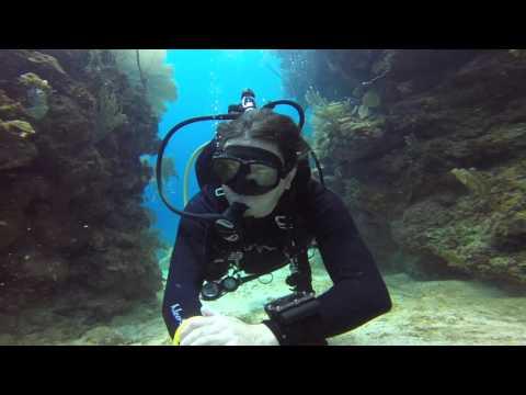 Utila - Black Coral Wall