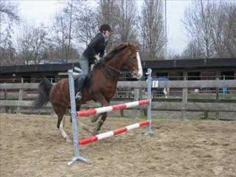 Mijn Vorige Paard Springen Youtube