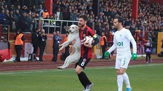 شاهد: كلب ظريف يقطع مباراة كرة قدم لتنفيذ ضربة حرة