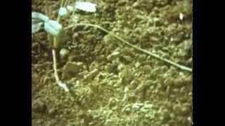 Размножение растений его частями