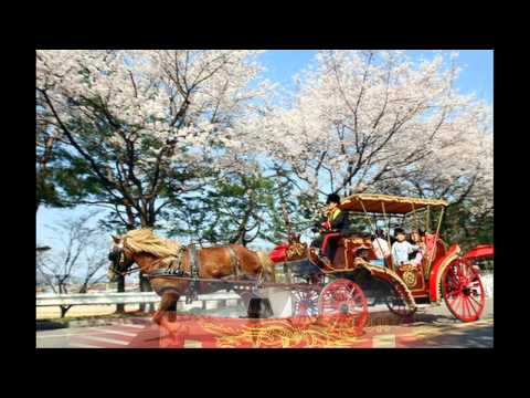 South Korea Travel Information and Travel Guide