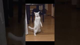 Funny Cat Gifs - Funny cat videos 2018