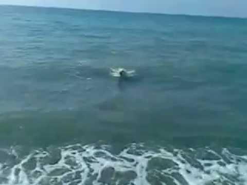 My Friend Swimming Dog Alex