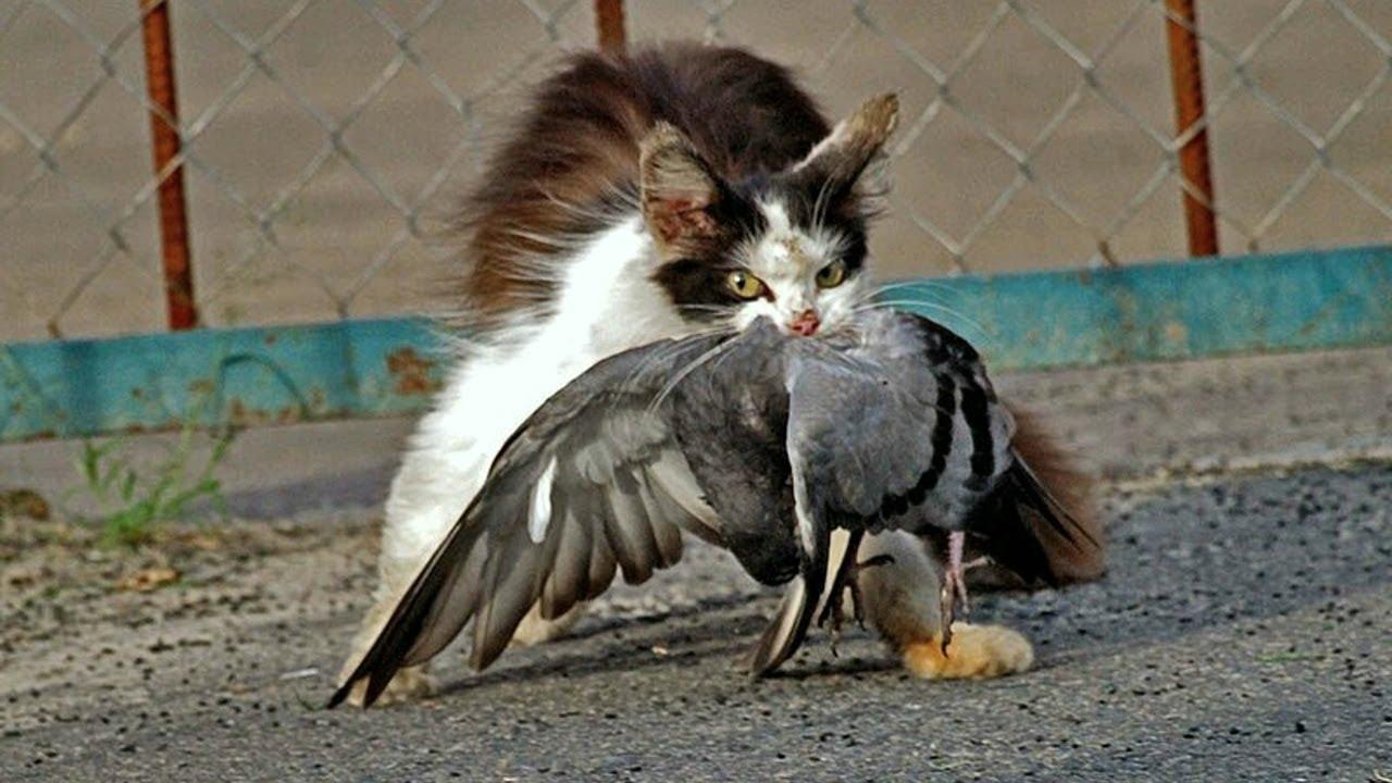 Домашние Кошки в Деле! Кошки против собак, птиц, крыс и белок...