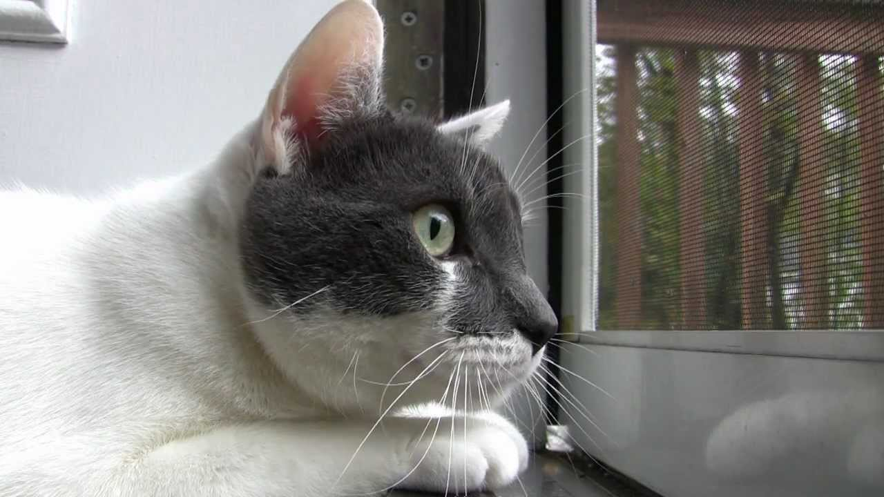 Why do cats chatter at birds? - is your cat a spokesmen ...