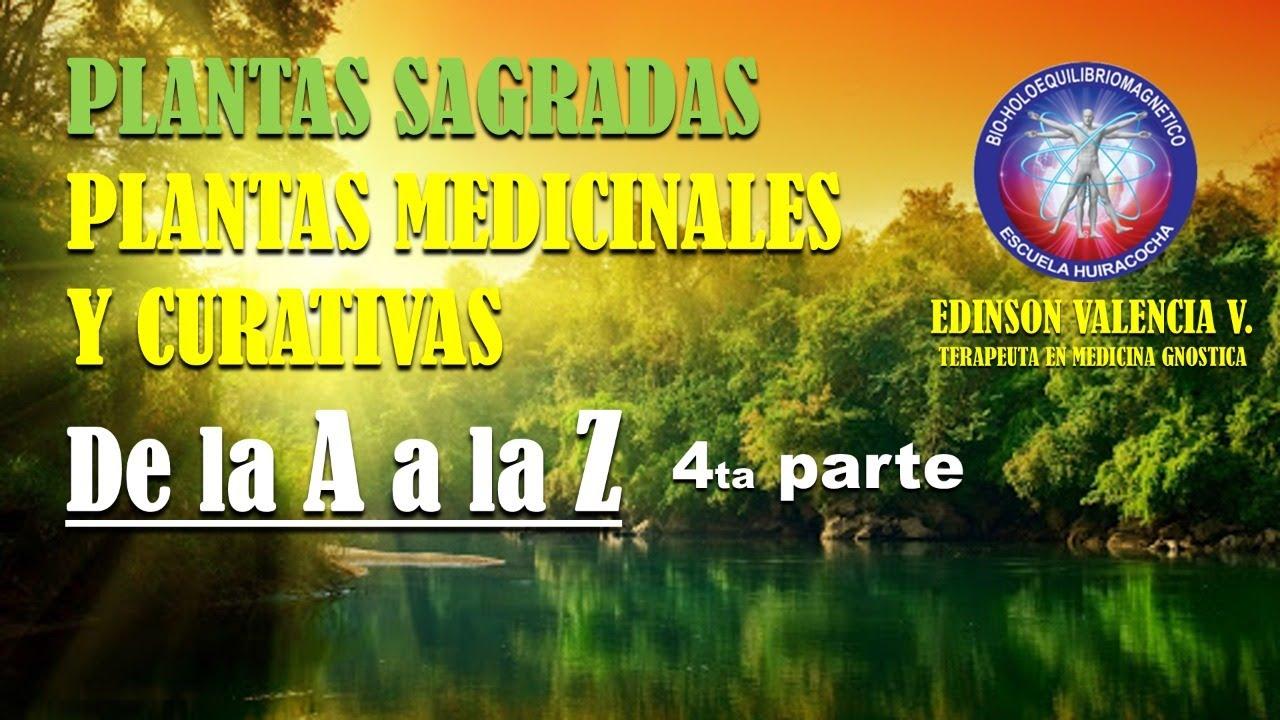 4ta parte PLANTAS MEDICINALES  de la A a la Z y BONDADES