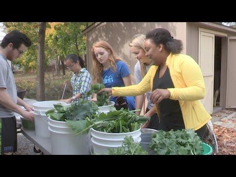 Students Harvest Fresh Greens