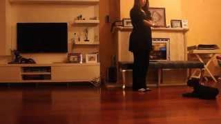Black Miniature Schnauzer - 3 Months Old