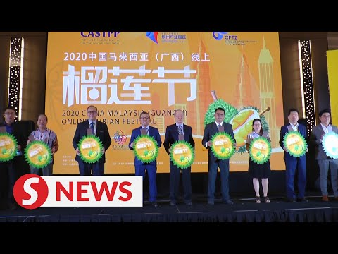 China-Malaysia (Guangxi) Durian Festival Sees Record Sales Of Musang King