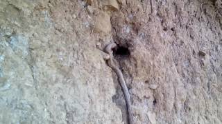 Сенсации 2017. В Горах в дагестане обнаружен пещера гномов 2017. хивский район