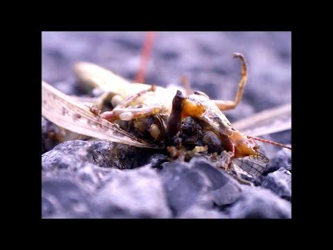 Roadkill of Invertebrates and Vertebrates