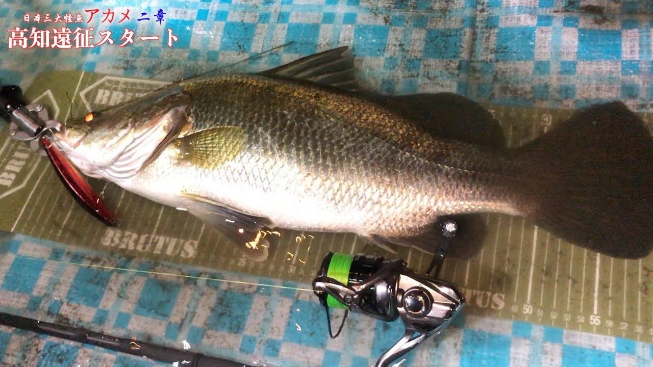 怪 大 魚 三 日本