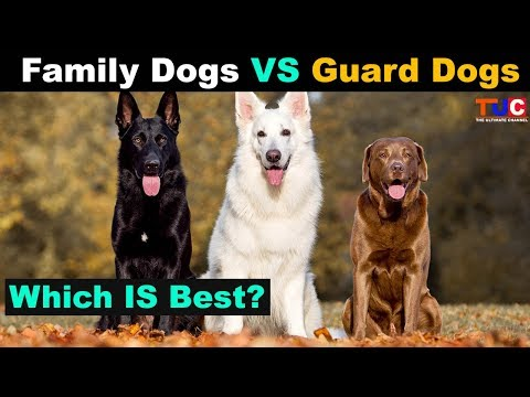 Family Dog VS Guard Dog Which is Best?? : TUC