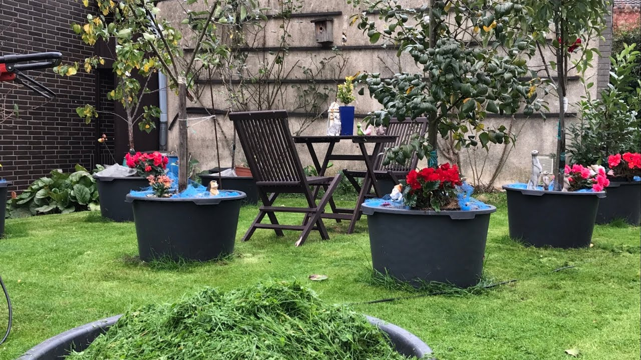 Fruit Trees For A Small Backyard