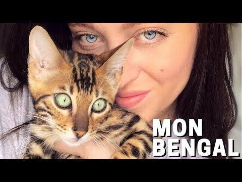 TOUT Sur Mon Chaton Bengal! | MISS VANILLE