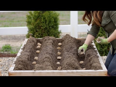 How to Plant Potatoes! 🥔🌿 // Garden Answer