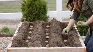 How to Plant Potatoes! 🥔🌿 // Gaŗden Answer