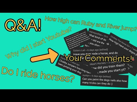 Q&A! | Chubby Jumpers
