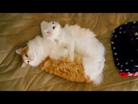 おやすみ猫ちゃんたち