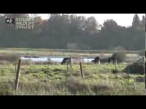 Waltham Brooks Nature Reserve: Video Blog