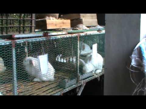 mô hình nuôi thỏ đẻ
