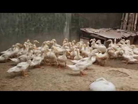 Download Video Bebek Lucu .3GP .MP4