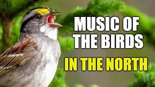 Music of The Birds in The North
