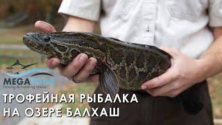 Трофейная рыбалка на озере Балхаш Казахстан