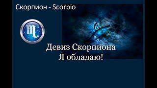 видео 5 Причин, почему стоит дружить со скорпионами. Вот на кого действительно можно положиться!