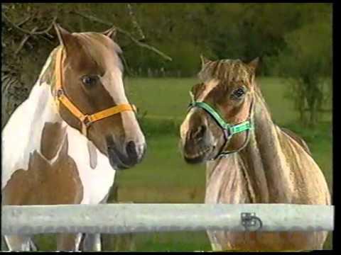 TALKING HORSE DRAMA