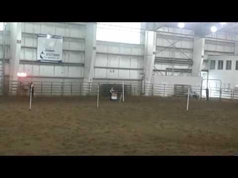 Linn county horse fair hamming class