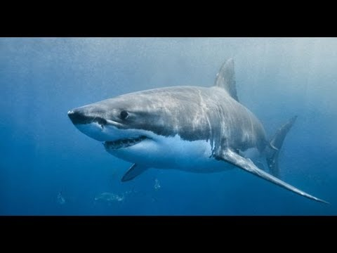 baby-shark-remix-(bass)-(siri-song)