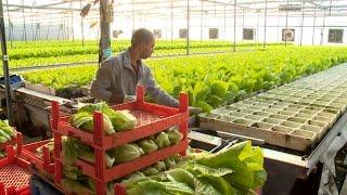 Nông trại thông minh, một giải pháp cho nền nông nghiệp xanh