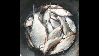 Поплавок на реке в мае или рыбалка в проводку на Угре в Калужской области