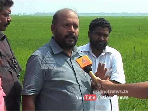 American company's chemical experiment in paddy fields in Thrissur  followup
