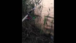Рыбалка на реке Кубань 2.05.2018. Судак, берш, сомик
