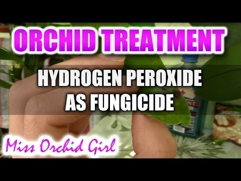 Red spider mite infestation insecticidal soap for orc doovi - Unknown uses hydrogen peroxide ...