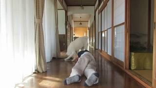 仏壇のろうそくを消しに来たゆうき、突然飼い主が倒れてしまいました。...