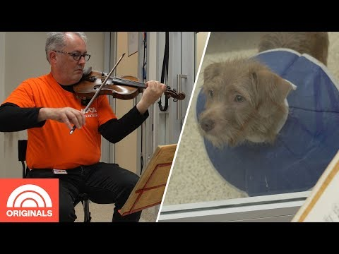 Karla Cantrell - Violinist to the Dogs:)