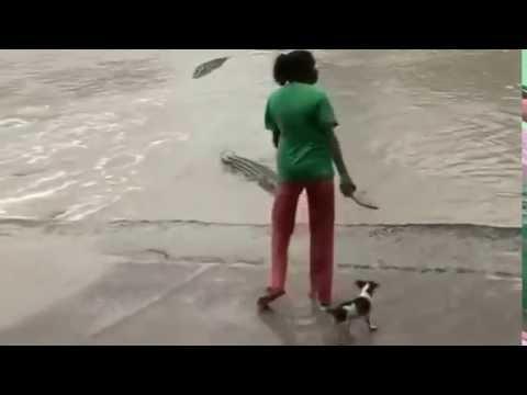 Mulher espanta crocodilo com chinelo na Austrália