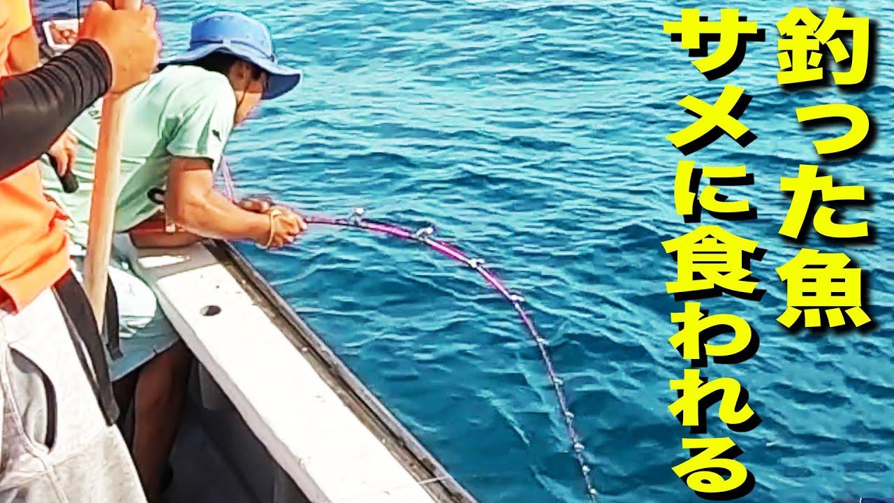 釣った魚をサメに奪われて海に引きずりこまれそうに...【水槽に入れる魚を捕獲 #3】
