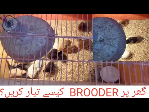 Homemade Chicken Brooder setup urdu