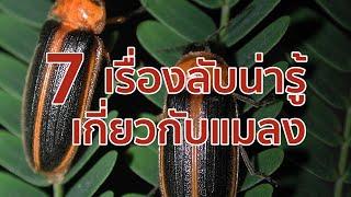 7 เรื่องลับน่ารู้เกี่ยวกับแมลง