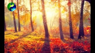 Relaxing Music; Reiki Music; Yoga Music; New Age Music; Relaxation Music; Spa Music; 🌅 626
