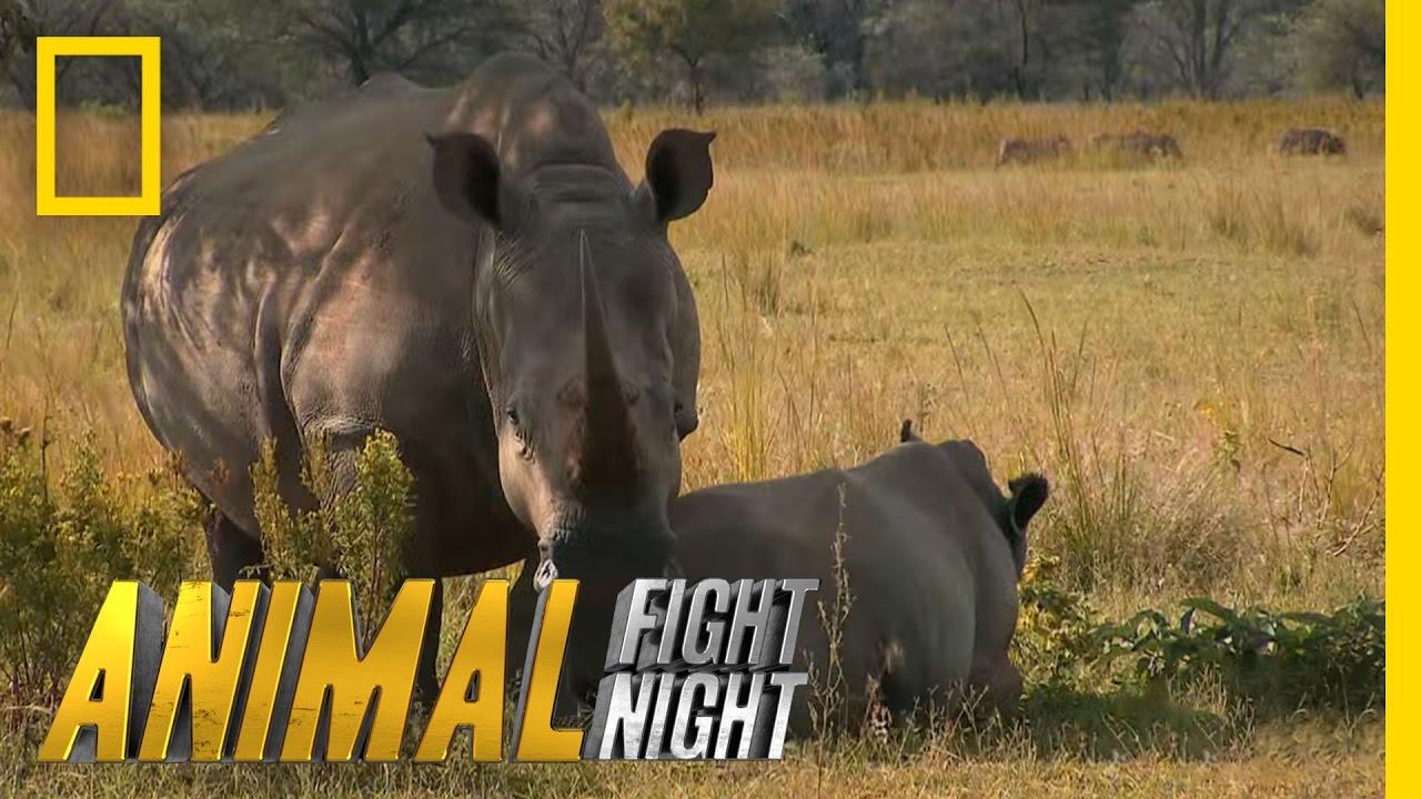 Animal Fight Night: Season 1 - YouTube